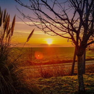 Sunrise Plumeau